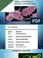 Salmonella enterica.pptx