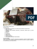 139 SP Compendio de Mineralogia
