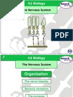 The Nervous System (3).ppt