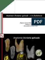 Anatomía Dentaria Aplicada a la Endodoncia.pdf
