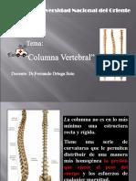 4.- Columna Vertebral