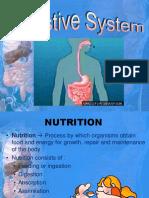 Digestive System Presentation New