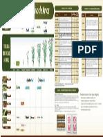fenologia arroz  tqc.pdf