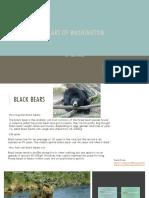 bears of washington