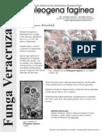 FUNGA VERACRUZANA Num. 42 Phleogena faginea