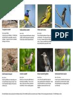 gardenbirds-1-16ctcbo