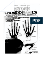 Anatomia filminas p. colorear.pdf