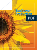 sunflower.pdf