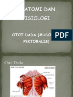 KELOMPOK 4 - Musculus Pektoralis