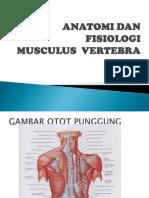 KELOMPOK 6 - Musculus Vertebrata