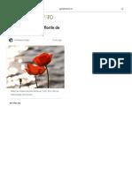 7 Curiozități Despre Florile de Mac