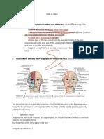 Anatomy - Face.pdf