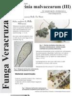 FUNGA VERACRUZANA Num.68 Puccinia malvacearum