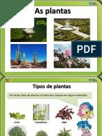 top plantas