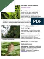 5 Plantas Con Nombre Cientifico