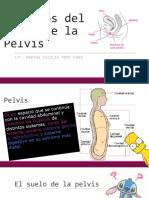 Músculos Del Suelo de La Pelvis