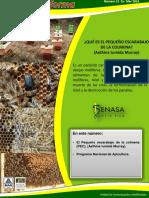 APICULTURA SENASA.pdf