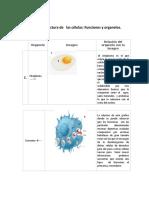 Ejercicio _2 _Estructura de La Célula Función y Organélos.