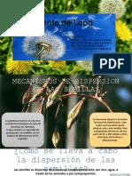 PDispersión de Semillas 1