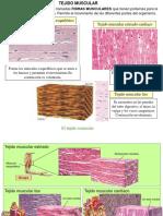 Nivel Tejidos 3 Muscular y Nervioso