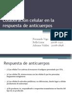 Colaboración Celular en La Respuesta de Anticuerpos