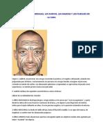 Significado de Las Arrugas Los Surcos Las Marcas y Los Pliegues de La Cara