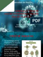 Virus de arqueas y virus de RNA de eucariotas