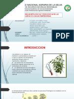 ADAPTACIONES MORFOLOGICAS Y FISIOLOGICAS DE LAS PLANTAS C3 A BAJAS TEMPERATURAS