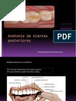 anatomadedientesposteriores-120321232748-phpapp02
