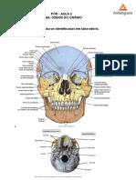 Pós-aula 2 (ossos do crânio e face) PDF.pdf