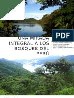 Bosques Del Perú Exposicion