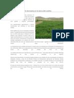 El Cultivo de La Alfalfa Dormante en La Sierra Alto Andina