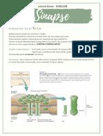 Sinapses - Fisiologia