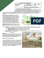 Ecosistemas y Energia Sexto