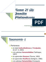 Platanáceas
