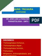 5.TRICHIURIS  TRICHIURA