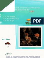 Características de los hongos, protozoarios y algas.