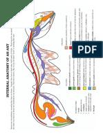 Ant Internal Anatomy Diagram