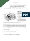 Cape Biology - Unit 1 - Enzymes