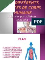 anatomie (1)