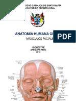 Músculos Cutáneos (de La Expresión Facial)