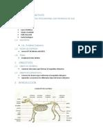 Esqueleto Informe