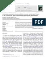 Lobulo Antenal Melolonhidae (1)
