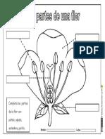 partes de una flor tercero.pdf
