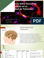 Interferencia Entre Lisosomas y Mitocondrias en La Enfermedad Expo
