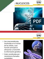 EAN BIOQUIMICA ÁCIDOS NUCLEICOS, ENZIMAS Y VITAMINAS.pdf