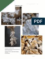 Psilocybin.mushroom.handbook.-.Easy.indoor.and.outdoor.cultivation.223.p[090-190].en.pt.pdf