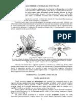 Caracterele Generale Ale Insectelor