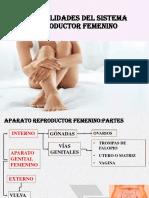 reproductor femenino DIAPOSITIVAS
