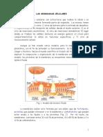 Tema 3 Y 4. La Membrana Celular y Transporte
